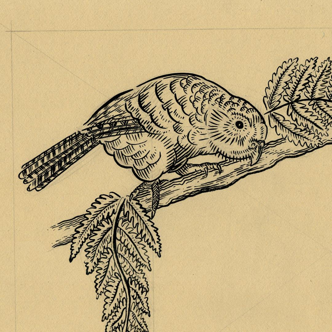 kakapo-new-crop